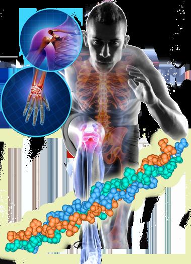 El colágeno en nuestro cuerpo